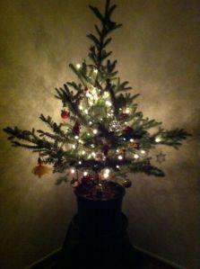 Weihnachtsbaum 13